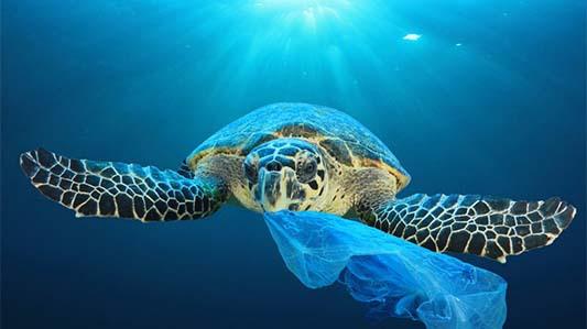 利用抗菌剂打造可持续的塑料产品